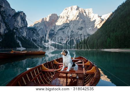 Dog On Lake Braies In Italy. Australian Shepherd In A Boat. Pet Travel, Adventure