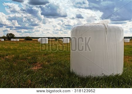 A Group Of White Plastic Wrapped Hay Bales Are Standing On A Field On A Windy Late Summer Day At The