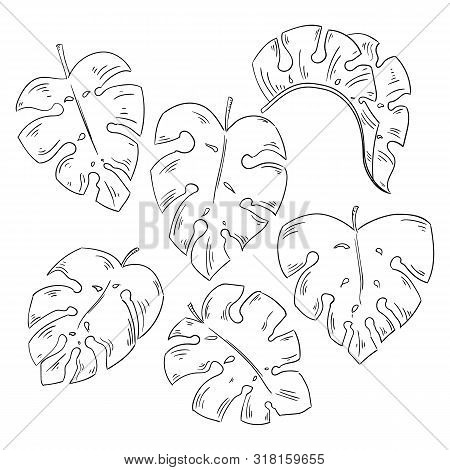 Tropical Leaves Collection Isolated Elements On The White Background.