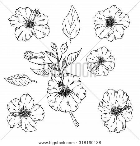 Hibiscus Floral Tropical Flowers Set. Wild Spring Leaf Wildflower Isolated. Black And White Engraved