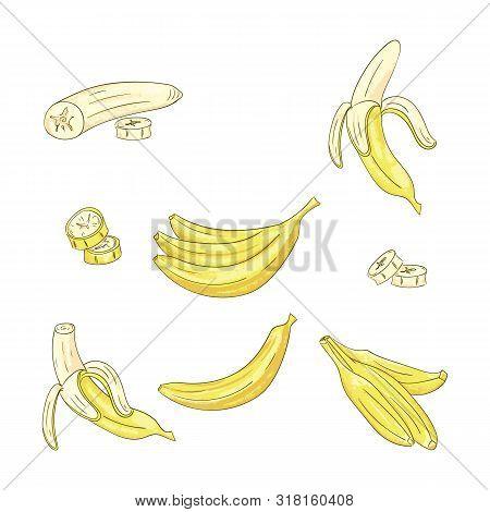 Banana Single And Bunch Color Illustrations Set
