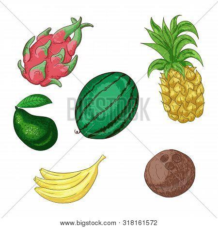 Tropical Fruts, Whole And Sliced Cartoon Illustration Set.