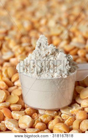 Pea Protein Powder In A Measuring Spoon.