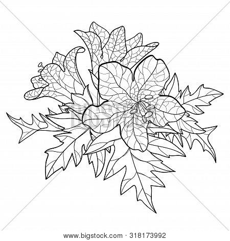 Vector Bunch Of Outline Toxic Hyoscyamus Niger Or Henbane Or Stinking Nightshade Flower And Ornate L