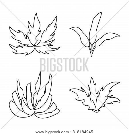 Isolated Object Of Hedge And Shrub Sign. Collection Of Hedge And Floral Vector Icon For Stock.