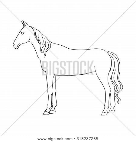 Vector Design Of Steed And White Icon. Collection Of Steed And Hoofed Stock Vector Illustration.
