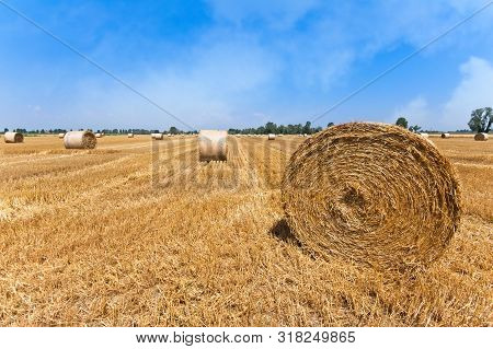Wheat Field After Harvest With Straw Bales.