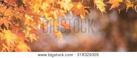 Beautiful Maple Leaves In Autumn Sunny Day In Foreground And Blurry Background In Kyushu, Japan. No