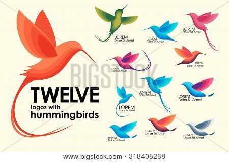 Modern Set . Colorful Birds, Colibri, Hummingbird In Flight, Trendy Minimalistic Template Design For