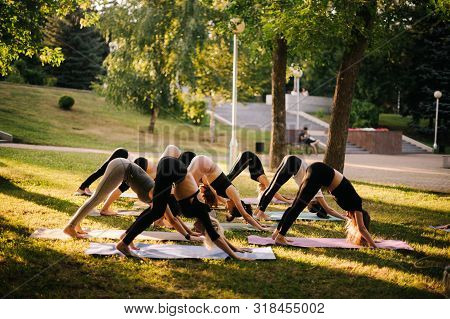 Sporty Women Are Practicing Yoga, Stretching In Downward Facing Dog Exercise, Adho Mukha Svanasana P
