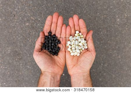 Top View Of Hands Holding Ripe Uneatable Wild Black And White Berries, Grey Background.