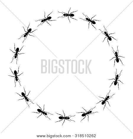 Ants Go In A Circle. Small Frame From Ants. Circle Path Ants. Ant Trail. Vector Illustration