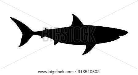 Shark Icon. Shark Black Silhouette Isolated On White Background. Sign Shark. Sea Predator Symbol. Ve