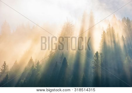 Sun Light Through Fog And Clouds Above The Forest. Spruce Trees On The Hill Viewed From Below. Magic