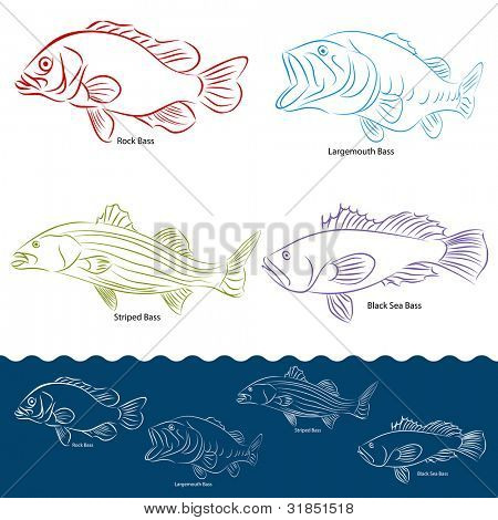 An image of a four types of bass fish.