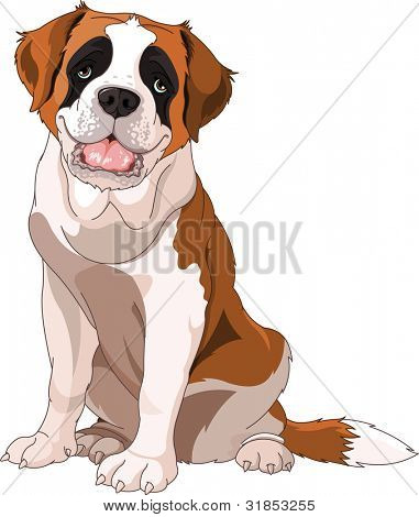 St. Bernard Dog, sitting in front of white background