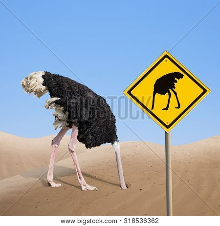 ostrich with head hidden in sand with warning traffic sign