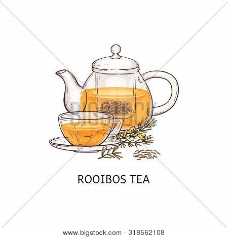 Rooibos Tea Drawing - Glass Teapot And Teacup Filled With Traditional Natural Drink
