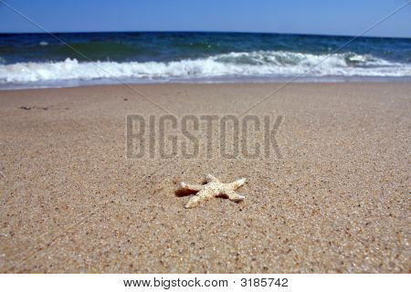 Starfish With Sand And Ocean