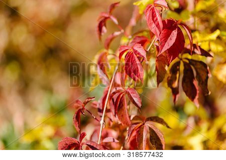 Autumn Landscape. Red And Yellow Autumn Leaves Background.