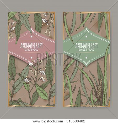 Two Color Labels With Acorus Calamus Or Sweet Flag And Alpinia Galanga Or Greater Galangal Sketch On