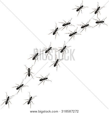 Ants Path. Black Line Of Worker Ants Isolated On White Background. Vector Illustration