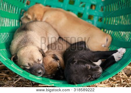 Many Cute Puppies In The Basket, Puppies Look At The Camera,puppy Sleeping On A  Blanket ,cute Dogs