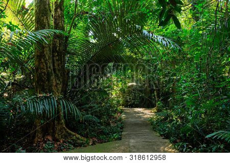 Concrete path under the rainforest leading to the Thi Lo Su waterfall, Thailand
