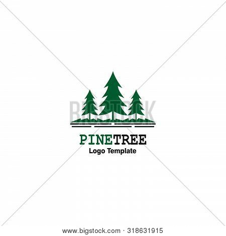 Pine Tree Outdoor Travel Green Silhouette Forest Logo , Natural Pine Tree Badge Abstract Stem Drawin