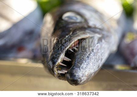 Close Up On Barracuda Teeth. Sea Fresh Fish Barracuda At Street Food Market . Seafood Concept. Raw B