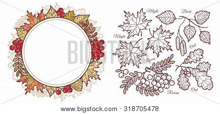 Autumn Leaves Set With Rowan, Maple, Birch And Oak. Leaves Frame.fall Leaf Design. Foliage Forest Le