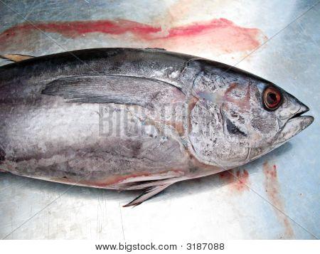 Tunafish Market 1
