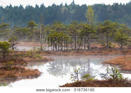 Scenic View Of A Fogy Swamp In A Morning