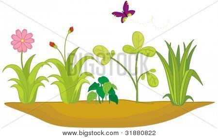 Illustration of garden bed plants