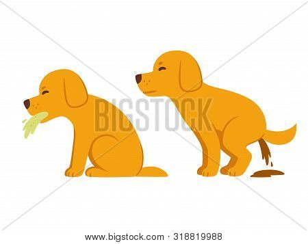 Sick Dog Vomiting And Having Diarrhea, Symptoms Of Food Poisoning And Intoxication In Dogs. Veterina