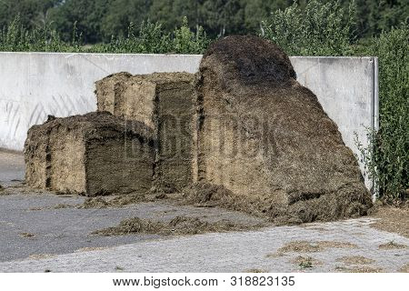 Silage In A Concrete Pit At A Dutch Dairy Farm