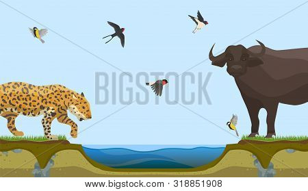 African Animals At Water Place At Savanna Landscape Vector Illustration. Leopard Or Panthera And Bul