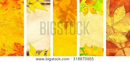 Set of vertical or horizontal autumn banners. Collection of seasonal background with old paper texture and autumn leaves. Mock up template. Copy space for text