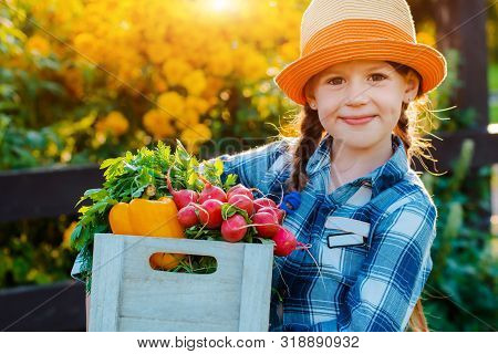 Kids Little Girl Holding Basket Fresh Organic Vegetables Background Home Garden Sunset. Healthy Fami