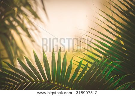Coconut Leaves On White Background,coconut Leaf, Palm Leaf White Background,palm Leaves And Coconut