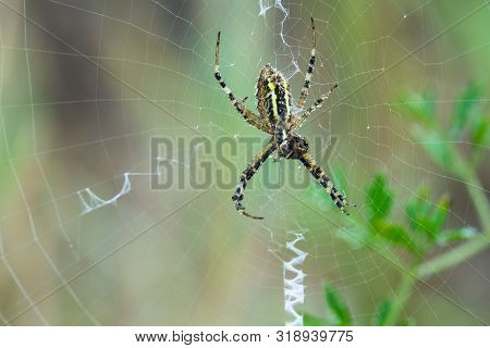 Close Up Of A Spider In Nature. Amazing Nature. Close Up Of A Spider Making Web. Spider. Nature. Hug