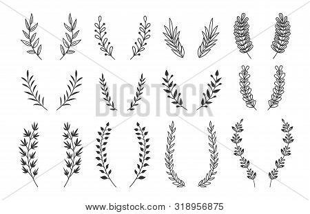 Branches Wreaths Set. Vector Laurel Ornaments Elements. Hand Drawn Floral Vintage Wreaths. Illustrat