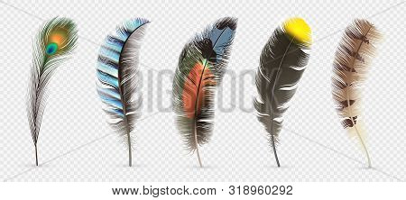 Realistic Bird Feathers. Detailed Colorful Feather Of Different Birds. 3d Vector Collection Isolated