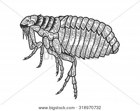 Flea Louse Insect Sketch Engraving Vector Illustration. Scratch Board Style Imitation. Black And Whi