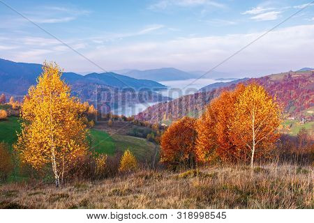 Beautiful Autumn Rural Landscape At Sunrise. Trees In Fall Colors On A Grassy Meadow In Morning Ligh