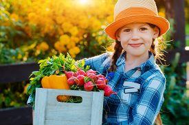 Kids Little Girl Holding Basket Fresh Organic Vegetables Background Home Garden Sunset. Healthy Fami