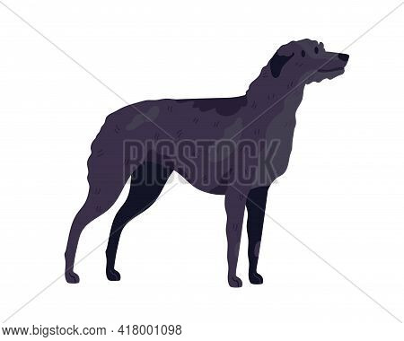 Irish Wolfhound Breed. Guard Or Hunting Dog. Tall Doggy Standing On White Background. Realistic Pure