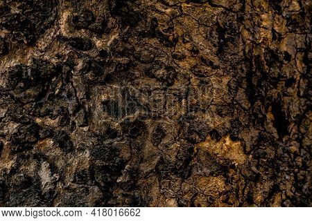 Hdr Brown Colored Rough Tree Bark In Close Up. Textures Concept
