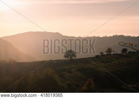 Horse On Pasture Eating Grass, Sunset Light