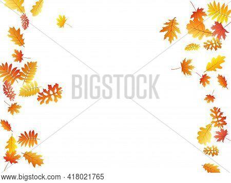 Oak, Maple, Wild Ash Rowan Leaves Vector, Autumn Foliage On White Background. Red Gold Yellow Rowan